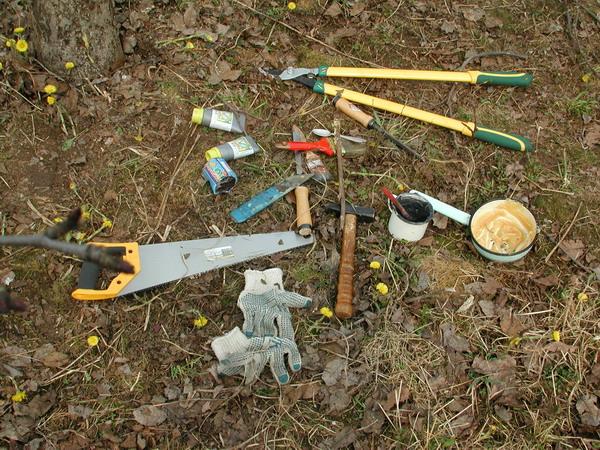 Садовые инструменты для проведения весенней обрезки яблони