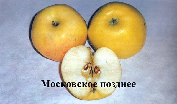 Внешний вид плода и мякоти яблок зимнего сорта Московское позднее
