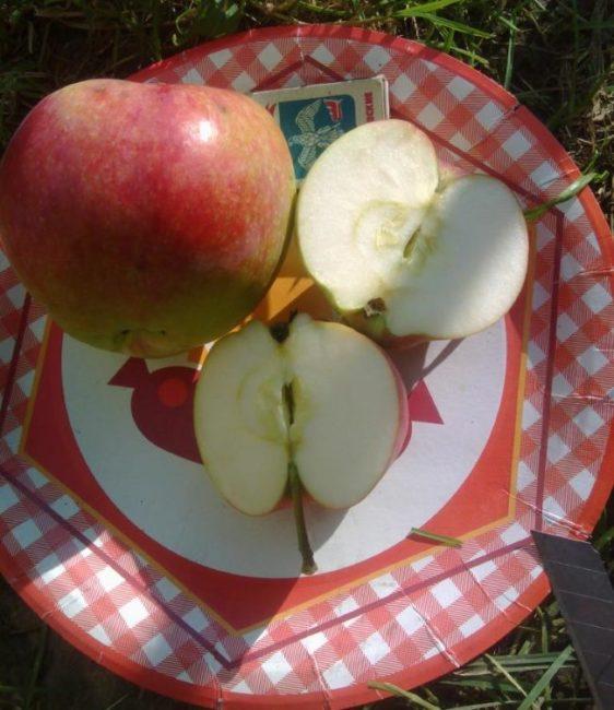 Разрез плода яблони сорта Мельба от канадских селекционеров