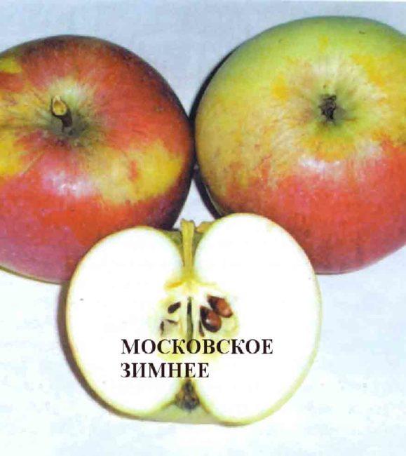 Плоды и мякоть яблони сорта Московское зимнее позднего срока созревания