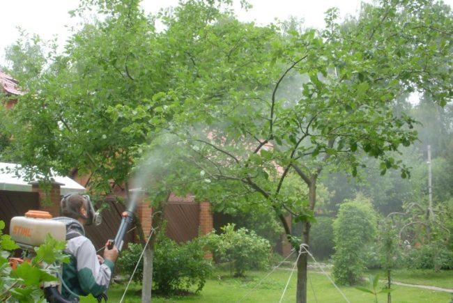 Обработка сада с плодовыми культурами с целью профилактики грибковых заболеваний