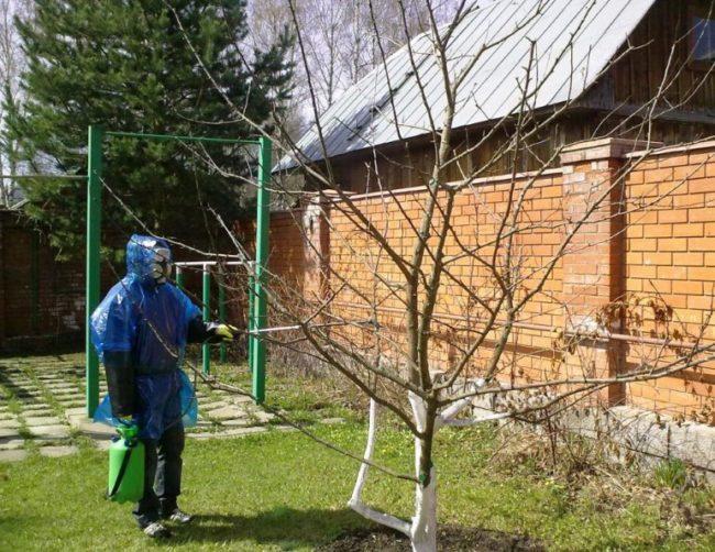 Обработка молодых деревьев яблонь по спящим почкам из ручного опрыскивателя