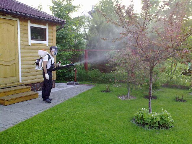 Весенняя обработка молодых яблонь с помощью бензинового опрыскивателя