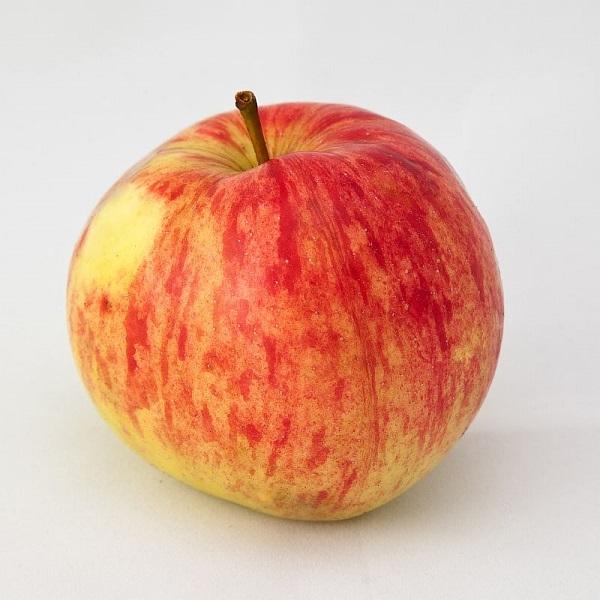 Крупное яблоко красно-желтого окраса гибридного сорта Осенняя радость