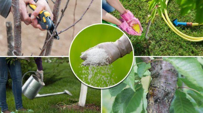 Уход за яблоней: обрезка, удобрение, полив
