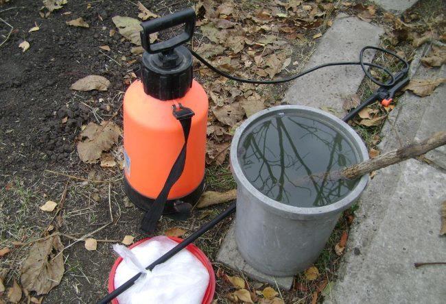 Подготовка рабочего раствора для обработки яблони с помощью садового опрыскивателя
