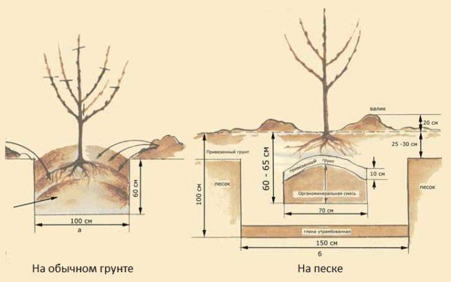 Схемы посадочных ям для яблони в плодородном и песчаном грунте