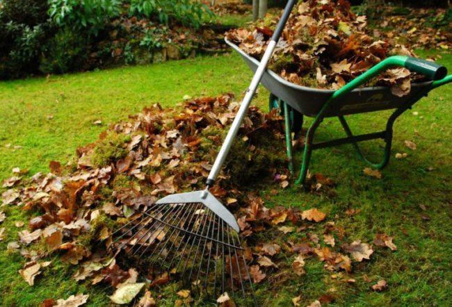 Плановая уборка в плодовом саду после осеннего листопада