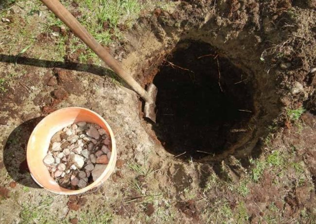 Ведро с щебнем для дренажа рядом с посадочной ямой для яблони