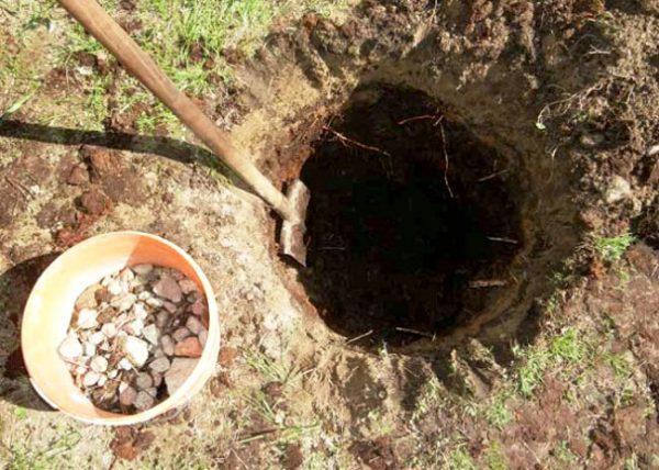 Устройство дренажа из битого кирпича и камня в посадочной яме для яблони