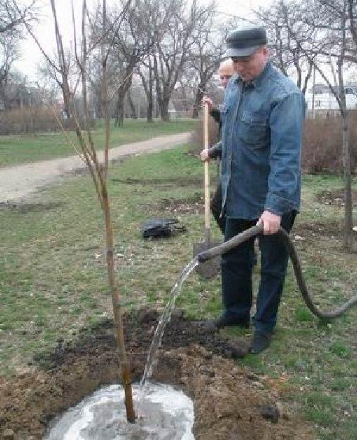 Полив садоводом яблони из шланга в поздний осенний период