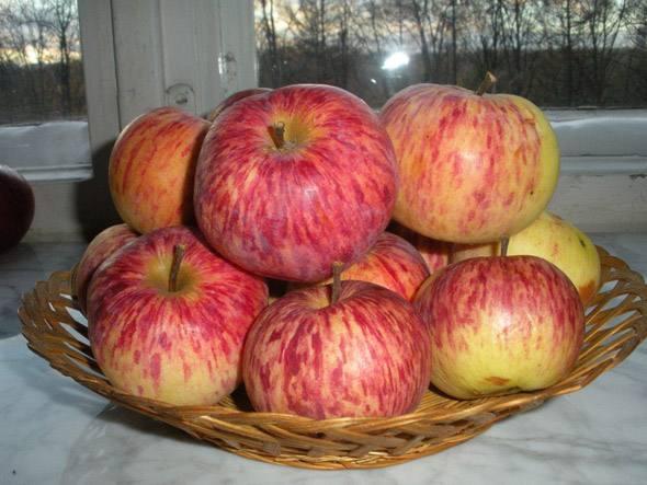 Плетенная корзинка с яблоками сорта Московская грушовка на подоконнике