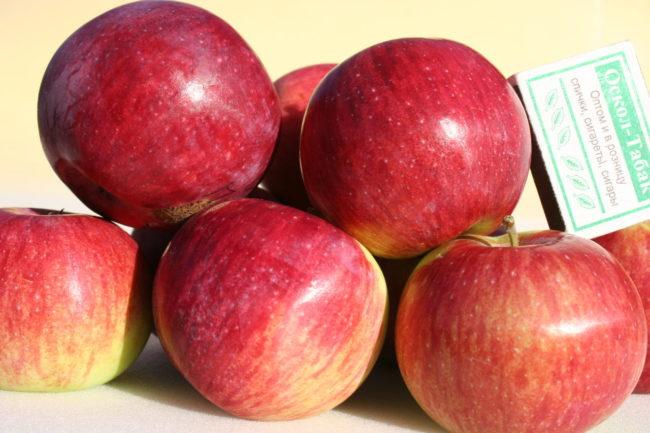 Яркая размытая окраска кожицы плодов яблони сорта Орловское полосатое