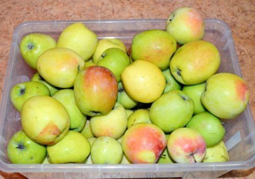 Пластиковый ящик с яблоками гибридного сорта Синап Северный