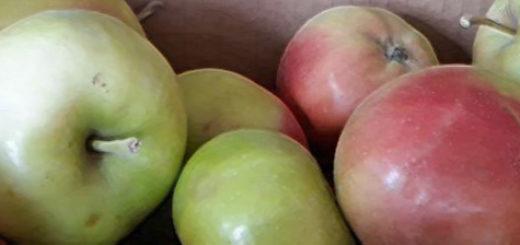 Спелые яблоки собранные в Вологде в коробке