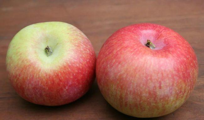 Два разных по величине яблока сорта Конфетное с красно-розовой полосатой окраской