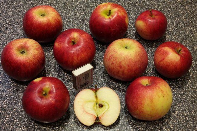 Внешний вид плодов и срез мякоти яблок сорта Юный натуралист