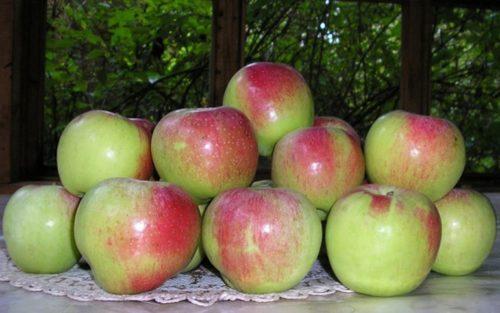 Красно-зеленые яблоки сорта Уэлси с блестящей кожицей