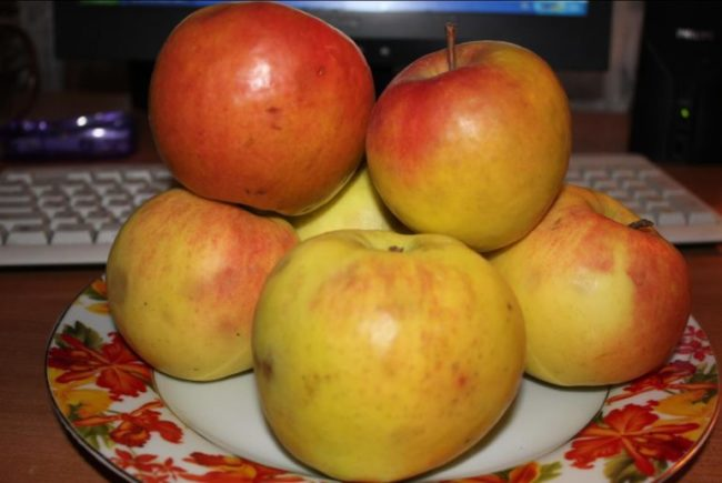 Фарфоровая тарелка с яблоками сорта Орловский Синап красно-золотистого оттенка