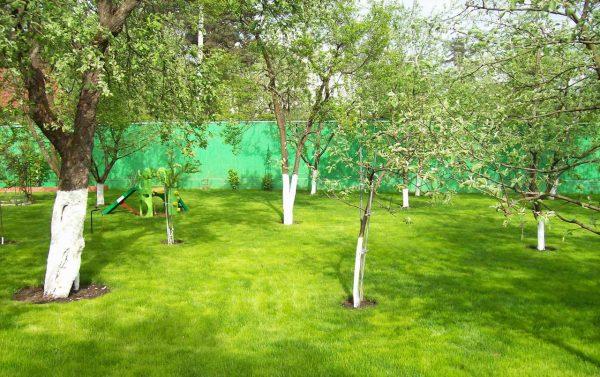 Ухоженный плодовый сад с яблонями различного возраста