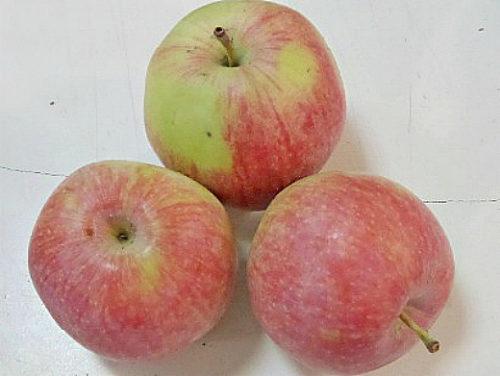 Три крупных яблока популярного в народе сорта Терентьевка
