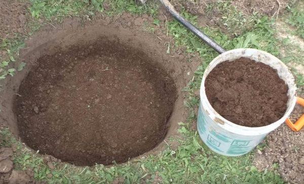 Засыпка питательного грунта в посадочную яму для яблоневого саженца