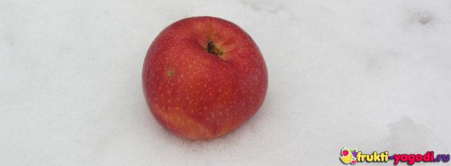 Зимнее яблоко лежит на снегу