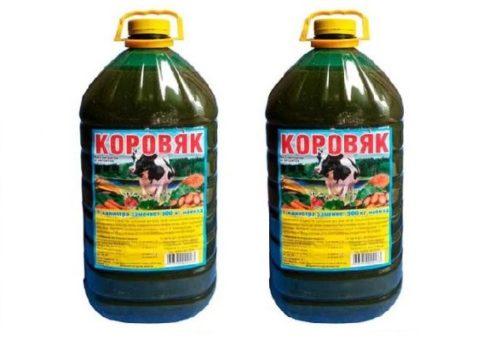 Две пластиковые бутылки с концентратом коровяка для весенней подкормки яблони