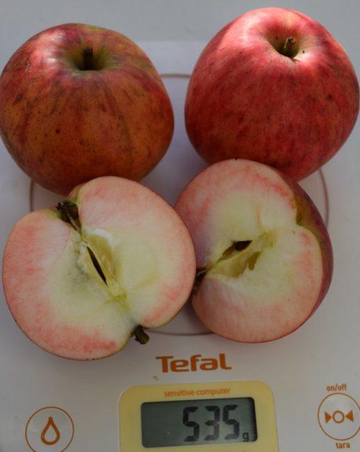 Разрез яблок сорта Осенне полосатое с розоватой мякотью под кожицей