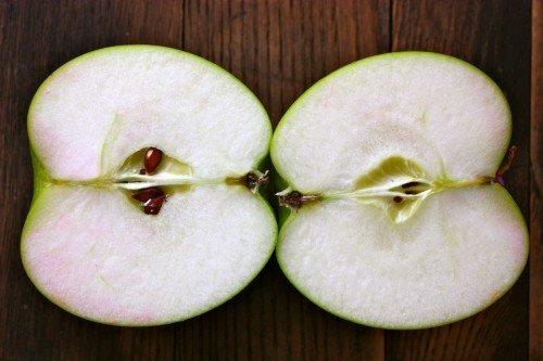 Белая мякоть разрезанного плода яблони гибридного сорта Богатырь