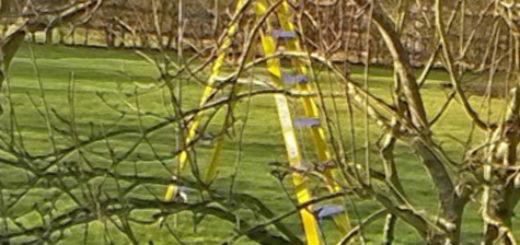 Осмотр и обрезка яблони в весенний период секатором