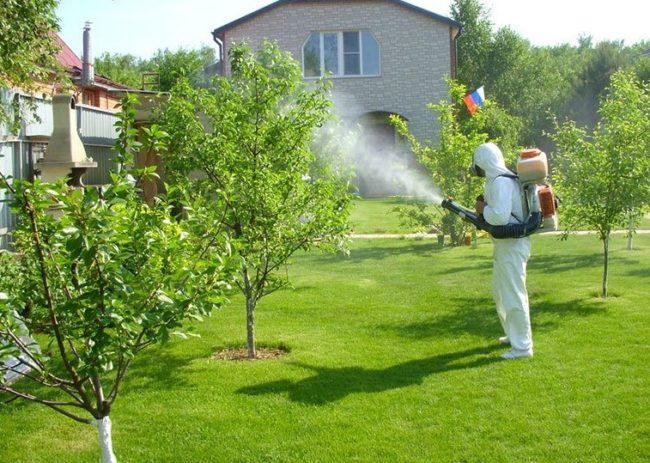 Проведение внекорневой подкормки молодых яблонь в период роста зеленых листьев