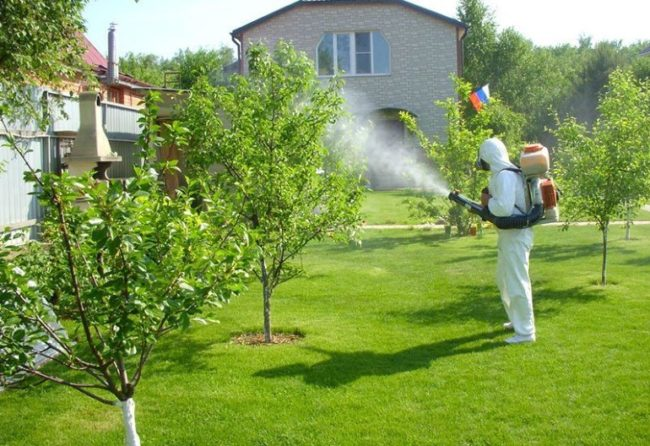Летняя обработка молодых яблонь от плодожорки и других вредителей