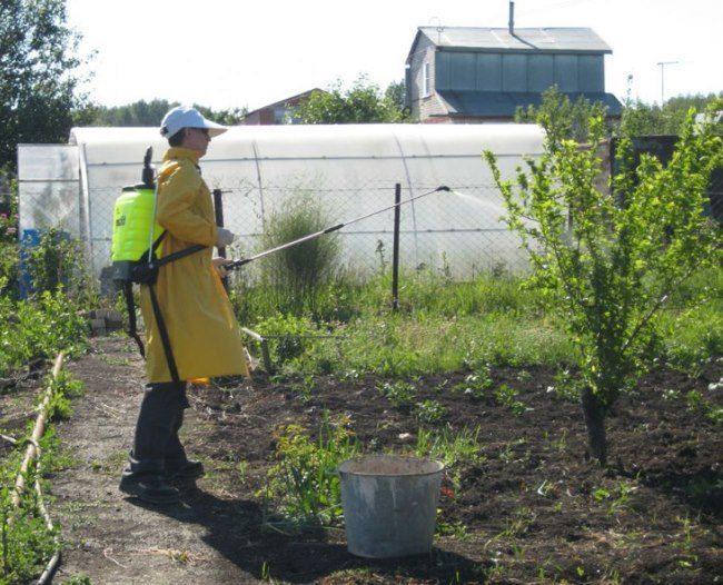 Весенняя внекорневая подкормка молодой яблони из садового распылителя