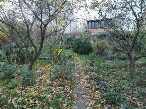 Плодовые деревья в осеннем саду после опадания листьев