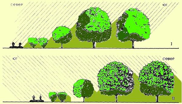 Схема освещенности крон деревьев в зависимости от сторон света