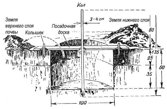Схема глубокой лунки для осенней посадки яблоневого саженца