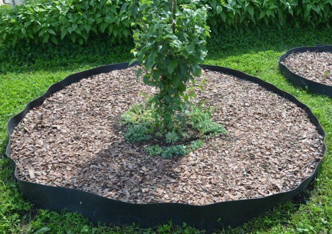 Мульчирование древесной щепой приствольного круга плодового дерева