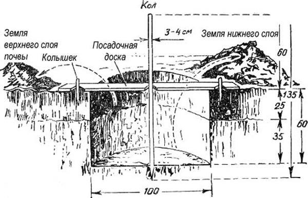 Схема ямы для весенней посадки саженца сливы на загородном участке