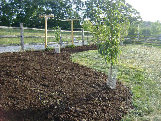 Вспаханная земля на загородном участке с посадками молодых слив