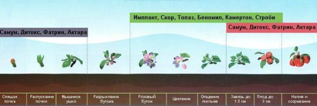 График обработки яблони химическими препаратами в течении летнего сезона