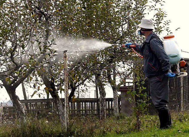 Проведение внекорневой подкормки яблони в начале лета из распылителя