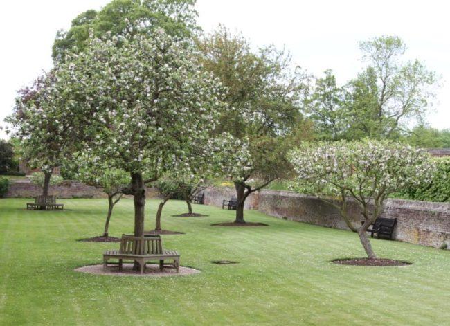 Высокие яблони в саду загородного парка с английским газоном