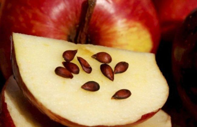 Долька яблока с семечками для посадки в комнатных условиях