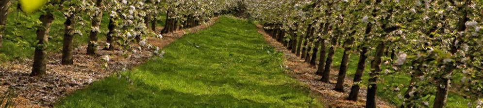 Яблоневый сад деревья посажены в ряд