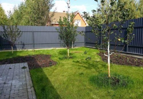 Фото молодого сада с правильным расстоянием между яблонями