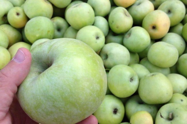 Крупное зеленое яблоко с восковым налетом на кожице