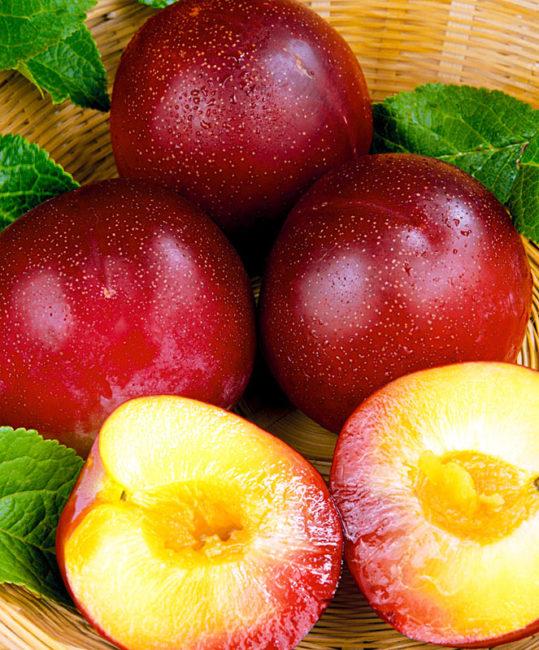 Внешний вид плодов и мякоти сливы сорта Амурская роза, выращенной в Ленинградской области