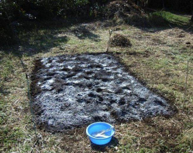 Раскисление почвы в саду с помощью извести для будущей посадки сливового саженца