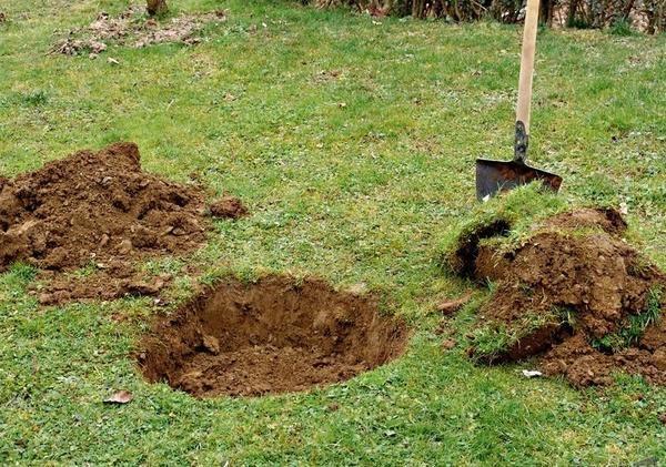 Копка ямы для яблони в конце лета для осенней посадки саженца
